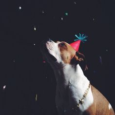 ++ happy new year! / photography : ariele alasko