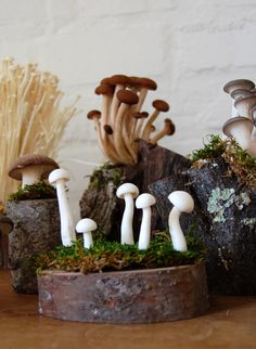 studio, clay, table displays, at home, art, nature table, wild mushrooms, centerpieces, garden