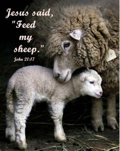 the lord, animal pics, baby lamb, mother, children, sheep, the farm, baby animals, wool