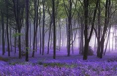 Lavendar beauty-and-inspiration