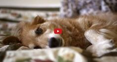 Dog's sad behavior helped save woman's life (VIDEO)