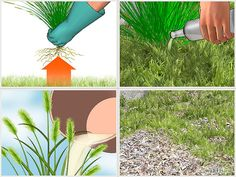 How to Get Rid of Foxtails
