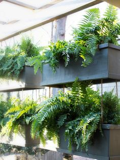 You can create privacy outdoors without building walls between you and your neighbors.  This living wall of repurposed window box planters does double duty as a privacy barrier and a stylish conversation piece-->http://hg.tv/y8fk