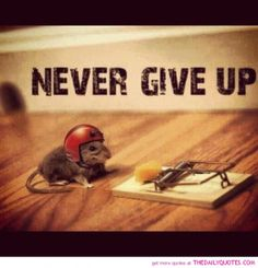 Never Give Up Motivational Quotes