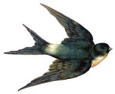 Vintage sparrow clip art