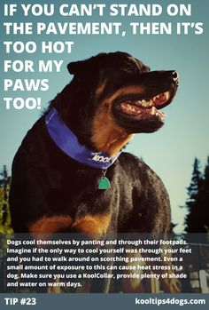 If you can't stand on the pavement, then it's too hot for your dog's paws too! www.koolcollar.com