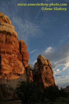 Cedar Mesa Pinnacles at Sunset, Doll House, Maze District, Canyonlands National Park, Utah by Anne Slattery - IMG_A_15475