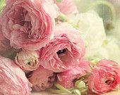 pink ranunculus-fine art print-shabby chic home decor-romantic-pink-green-cream-flower home decor