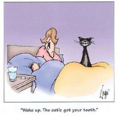 dental humor, funny humor, funny stories, funni, funny cartoons, funny quotes, cat jokes, silly cat, cat memes
