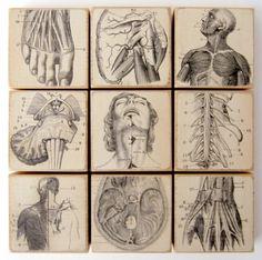 Anatomical Dissection - Set of 9 EPHEMERA ART BLOCKS - 1892 French Anatomy Illustrations
