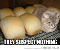 Haha! In our house, when a cat sits in this position, we call it meatloaf. But loaf of bread works, too!