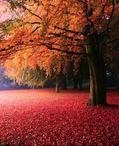 autumn / söderslätt, sweden