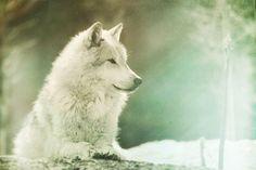 White Wolf.