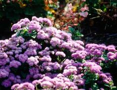"HowStuffWorks ""Plants for an English Country Garden"""