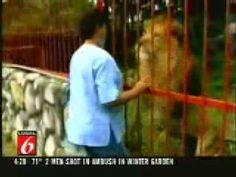 Lion Really Loves His Rescuer