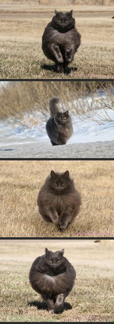 You'll never be as majestic as this cat //