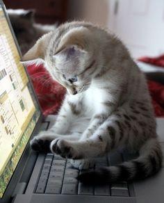 Kitten on Computer