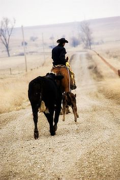 Leading them home... picture by Ree Drummond / The Pioneer Woman, via Flickr