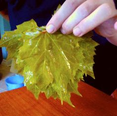 Grape Leaves - canning