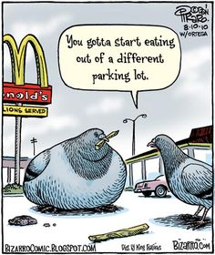 Love this cartoonist's sense of humor - Even birds are affected by our poor food options! http://www.wowyouarereallylucky.com/recent-health-articles food choices, friday funnies, whole foods, thought, bottles, blog, comics, birds, fast foods