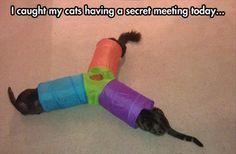 Secret meeting of the cats haha.