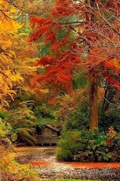 Autumn, The Dandenongs. Australia