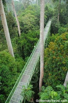 I want to walk through the rainforests in Borneo! : )