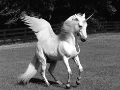 Pegasus unicorn = extra magic