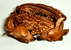 funny animals, baby deer, animal pictures, heart, taxidermy, sleeping babies, baby animals, twin fawn, twins