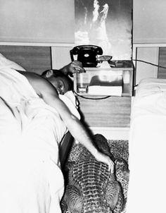 Gainesville, 1950's