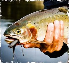 Fly Fishing in Winter Park and Grand County, Colorado