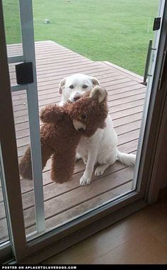 Loves His Bear • dog dogs puppy puppies cute doggy doggies adorable funny fun silly photography