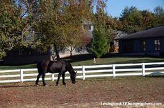 Lexington, KY; Horse Country Extraordinaire