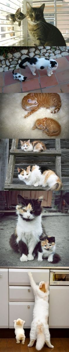 Baby kittens like their parents!