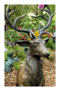 Bronze Buck