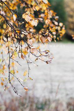 .otoño.