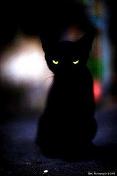 .Halloween Kitten