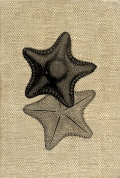 Vintage Starfish (iron on transfer)