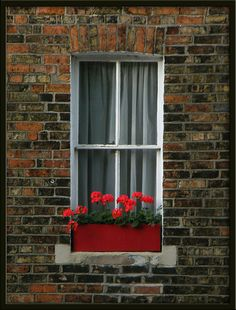 red window box
