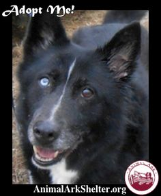 Petfinder  Adoptable | Dog | Husky | Hastings, MN | Vail Hello! My name is Vail and I am a 14 year old Husky/Shepherd mix. I am quite unique, as I have one blue eye and one brown eye. I am a very nice girl who loves walks and hanging around outside, watching the world go by. My story is a sad one, for you see, my owner is no longer able to care for me. He hated to give me up, but he had no choice. I will really miss him, but I am hoping that someone will see my picture and fall in love with me.