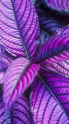 Pretty Purple