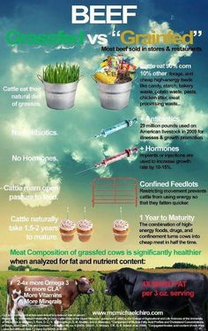 food recip, grain fed, nutrit, healthi, grassf beef, eat, grass fed, fed beef, grainf beef
