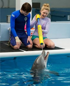 Celebrate Homeschool Day with Dolphin Tale 2   HSLDA Blog