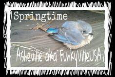 Springtime in Asheville.