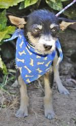Boss is an adoptable Terrier Dog in Montgomery, AL. Hi to you! My name is Boss! With that name you may think I am feisty or bossy, but I'm not. I am a really sweet little guy that doesn't understand w...