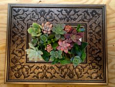 Vertical Living Succulent Wall Hanging or Table Top in Dark Scroll Patterned Frame Great  Gift
