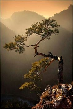 pines, bonsai trees, mountain, sunsets, the edge, beauty, place, mother nature, poland