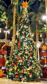 christmas in hawaii #Aqua12staysofchristmas