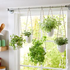 herb planters hanging in window from pipe