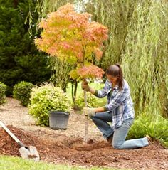 Plant in the fall, and you'll have it made in the shade next summer. The cooler temperatures help new trees develop strong root systems. Autumn is ideal for planting new shrubs, too, so pick your favorites and dig in. Click through for the how-to.